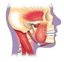 Skull & Throat
