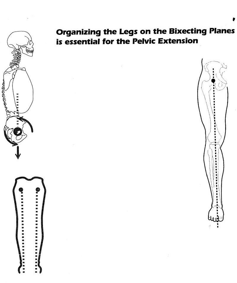 Organizing the Legs on the Bixecting Planes is essential for the Pelvic Extension