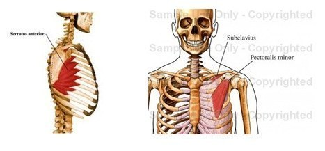 wellness spa – subclavius, pectoralis minor, serratus anterior